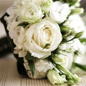 小清新淡雅白玫瑰好看的图片