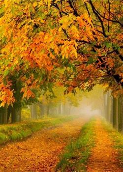 精选秋意渐浓的唯美秋天风景图片